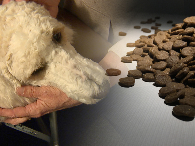 Heart disease, toxins add to dog food concerns
