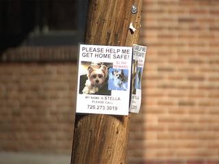 Dog stolen off porch on Halloween returned