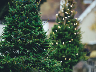 Where to cut down your own Christmas tree