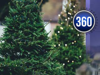 This Christmas, real or fake tree?