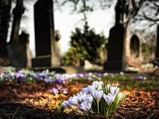 Boy raising money for best friend's gravestone